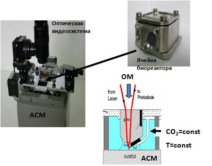 A miniature bioreactor for optical and contact-probe analysis of living cells in vitro